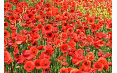 Lord-Lieutenant's Message for Remembrance 2020